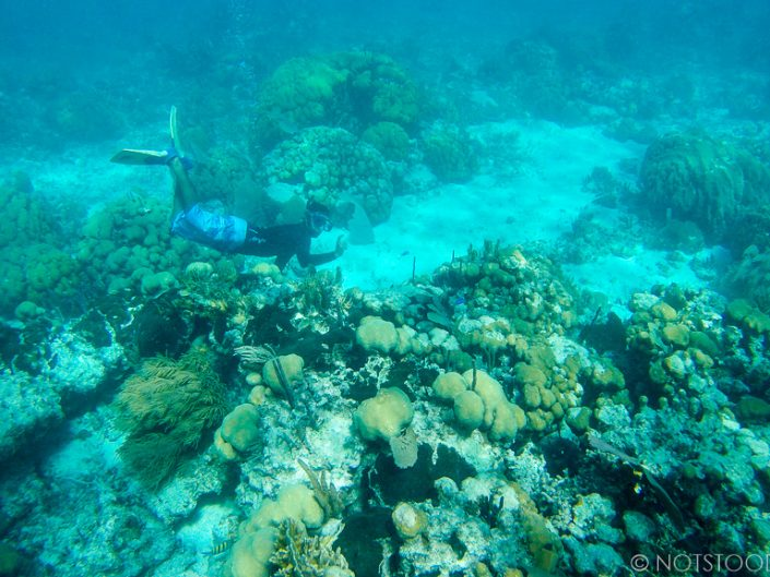 Snorkelling tour at Hol Chan Marine Reserve.