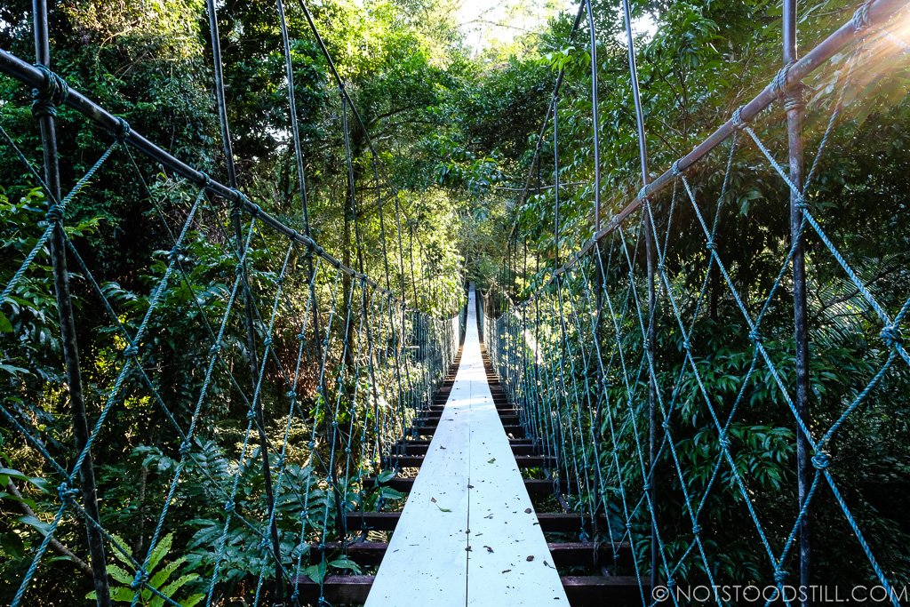 One of several hanging bridges at the Tijax hiking trails
