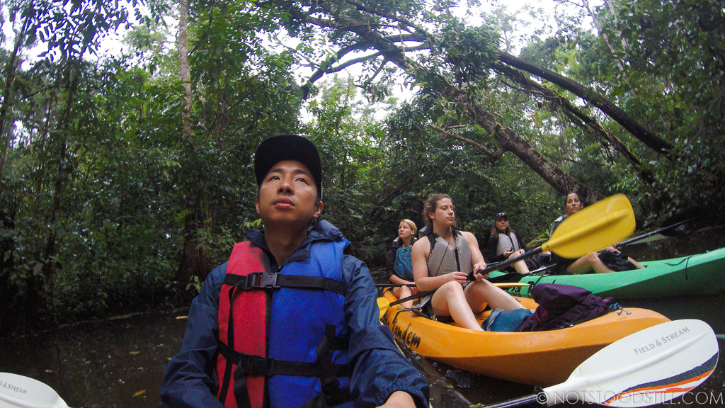 On the lookout for howler monkeys