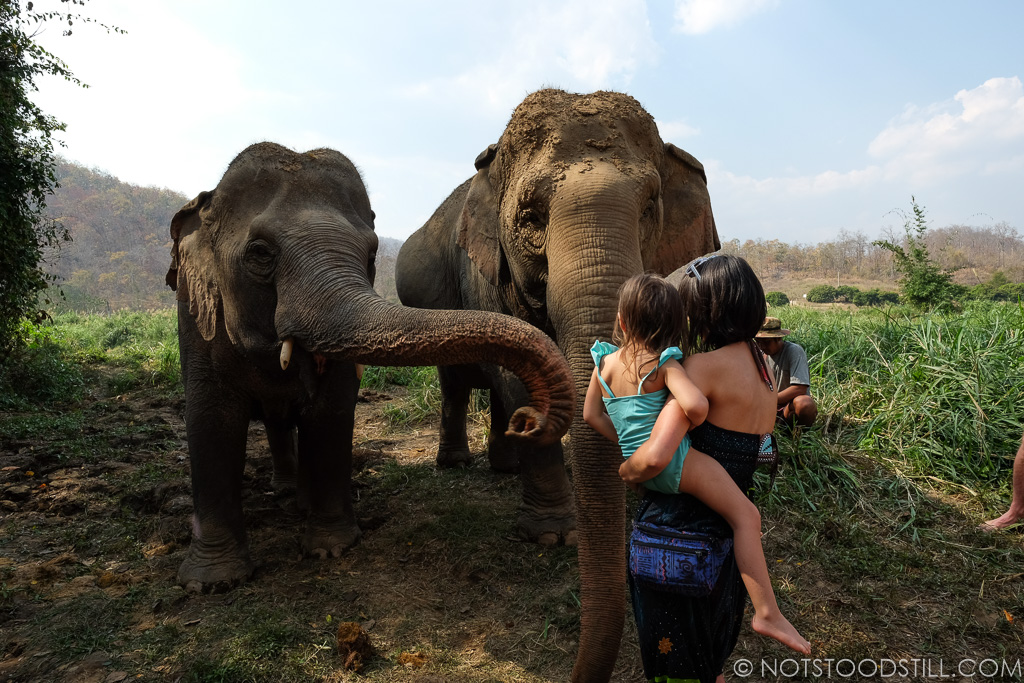 Meeting the elephants at Conserve Natural Forests.
