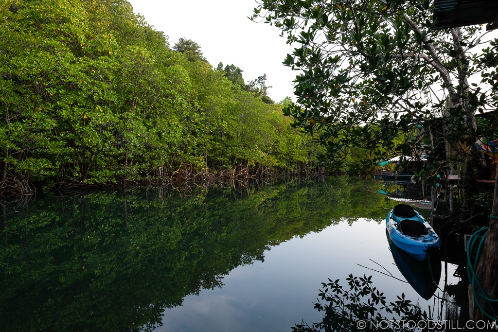 Kayak the mangrove rivers