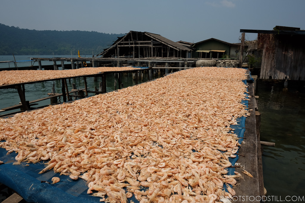 Drying shrimp at Ao Salat Fishing Village