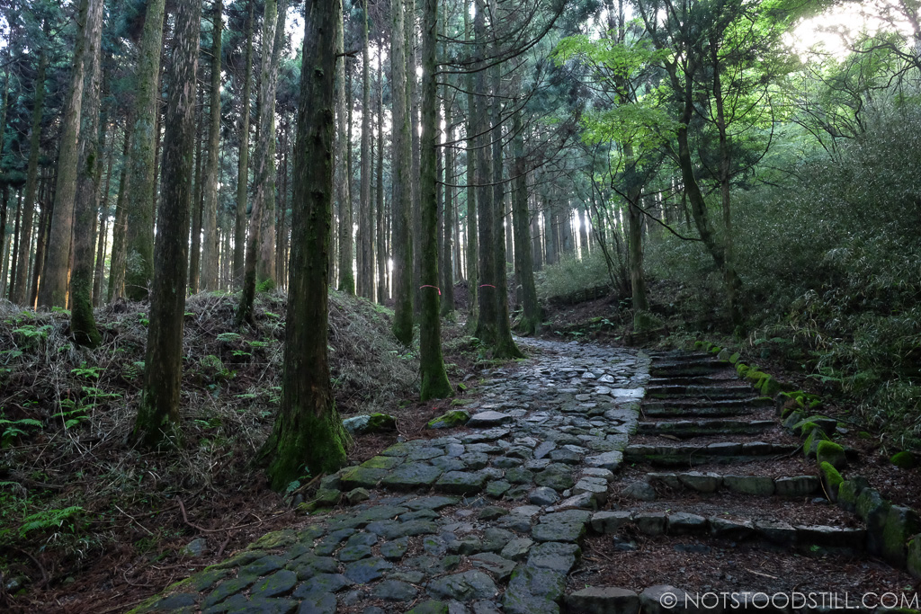 A great walk through the pine forests along the Old Hakaido Rd.