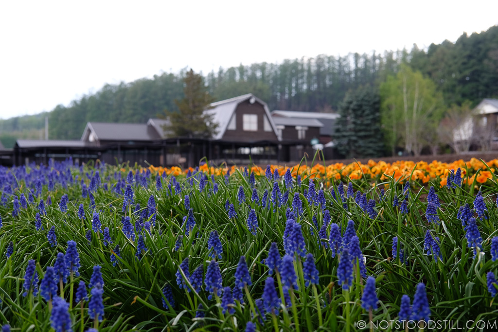 Farm Tomita, (near Furano) for the lavender lovers