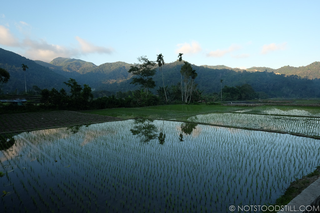 Moni rice fields