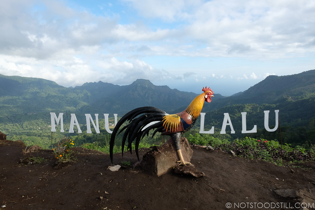 At Manulanu Panaroma viewpoint - hard to ignore this oversized rooster!